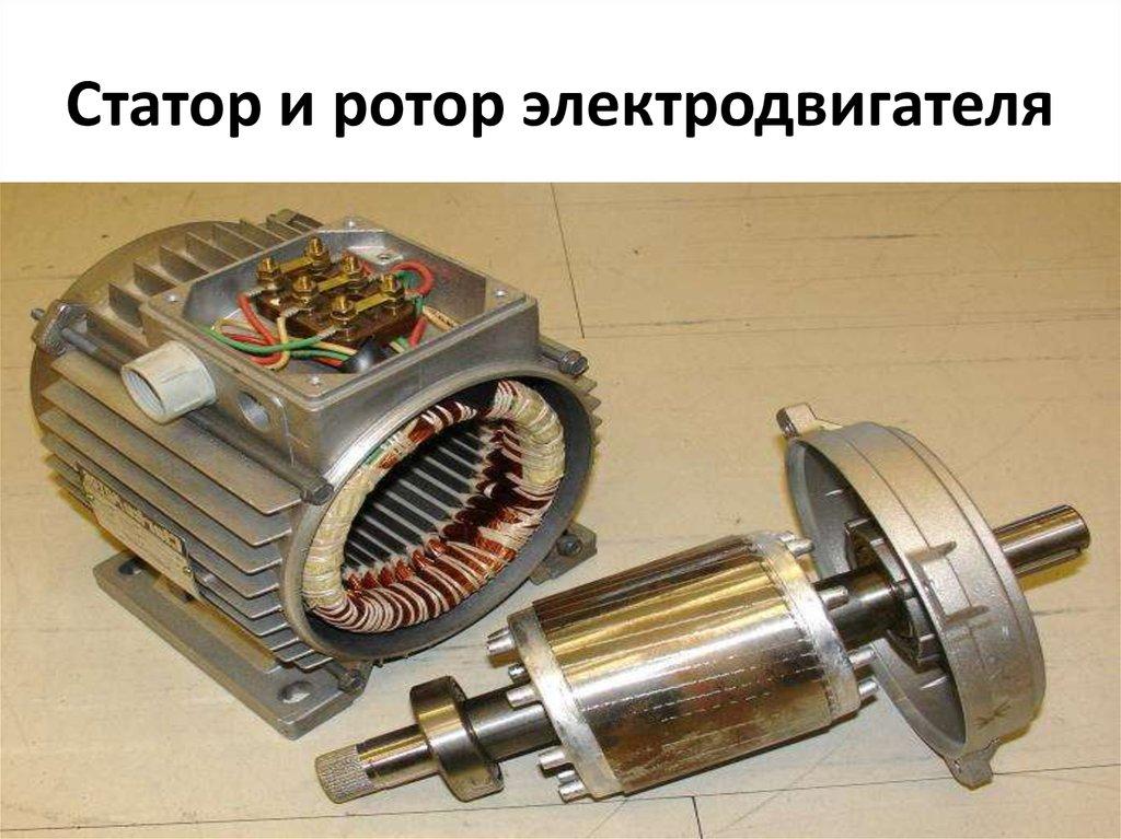 ротор и статор картинки зубатку