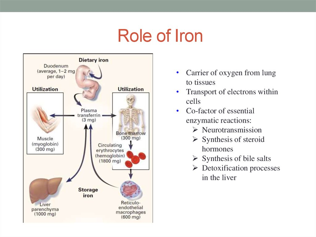Role of Iron