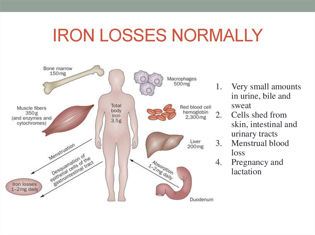 IRON LOSSES NORMALLY