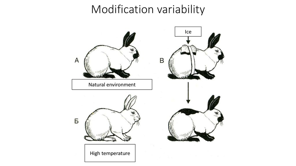 Modification variability