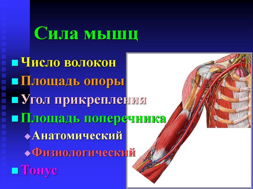 Рассылка muscle power мышечная сила игровой автомат зеркало ивный тотализатор