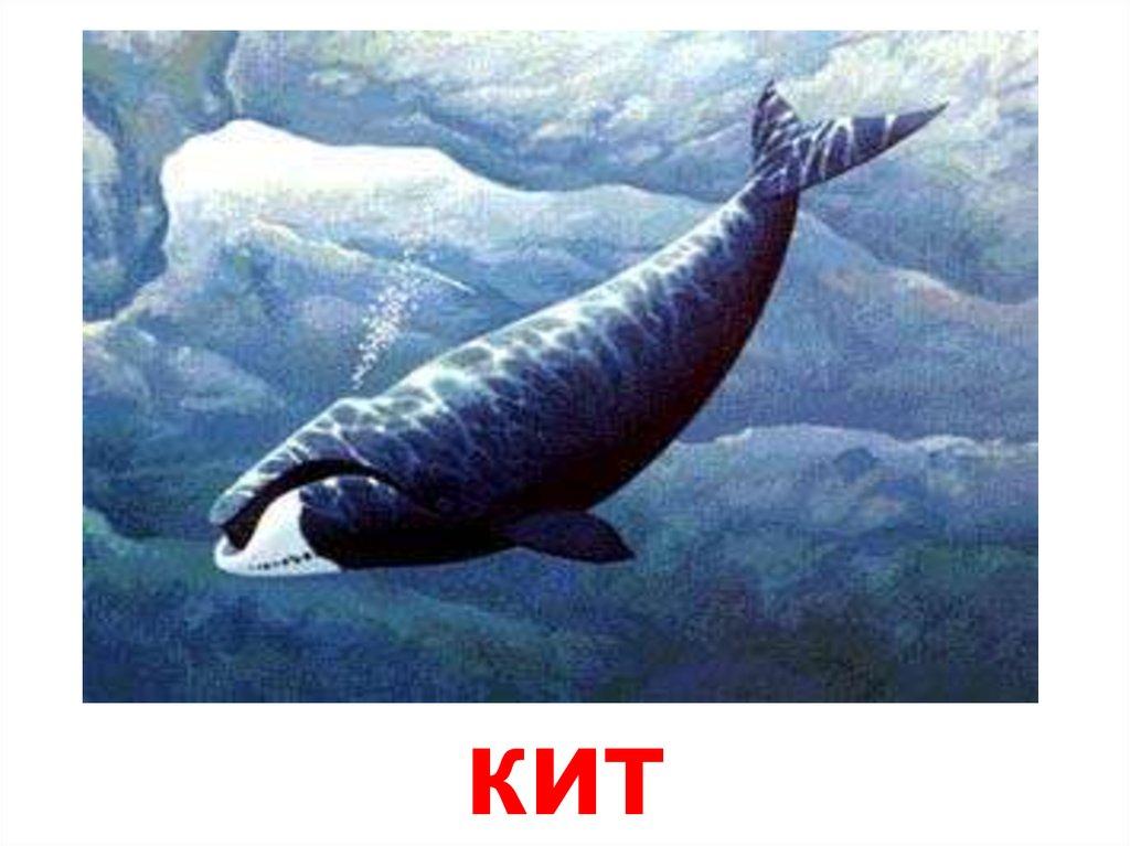 Картинка кит с надписью для детей