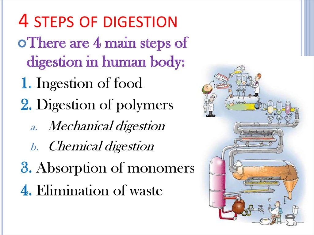 4 steps of digestion