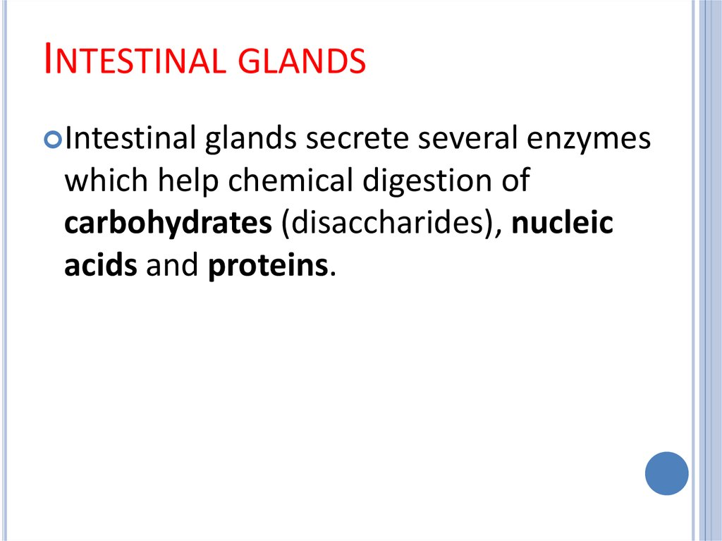Intestinal glands