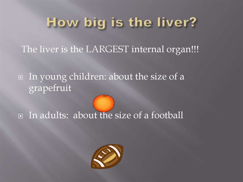 How big is the liver?