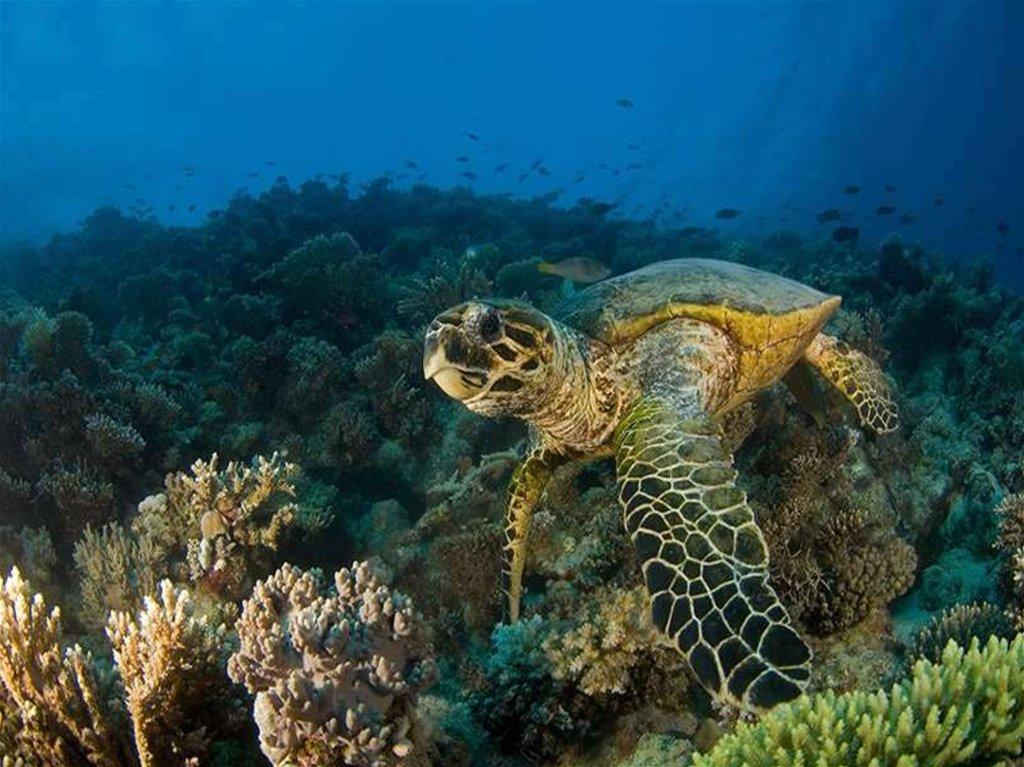 морская черепаха фото и названия наличии лучшая лыжная