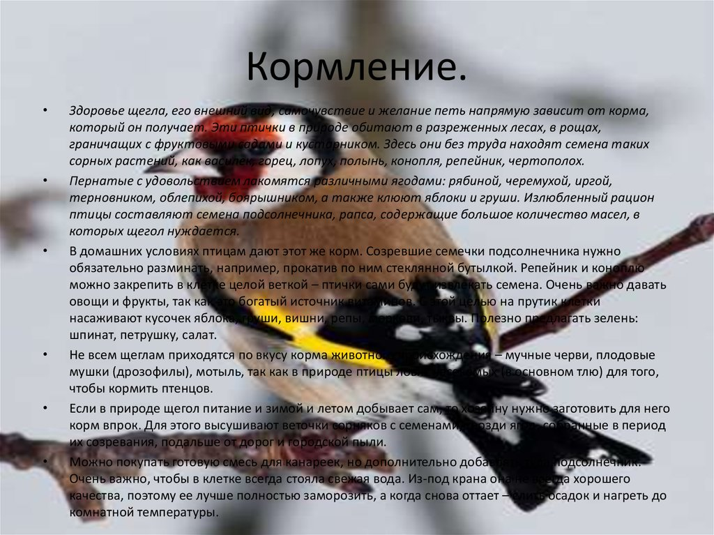 Семена конопли кормление птиц как приготовить прикормку с конопли