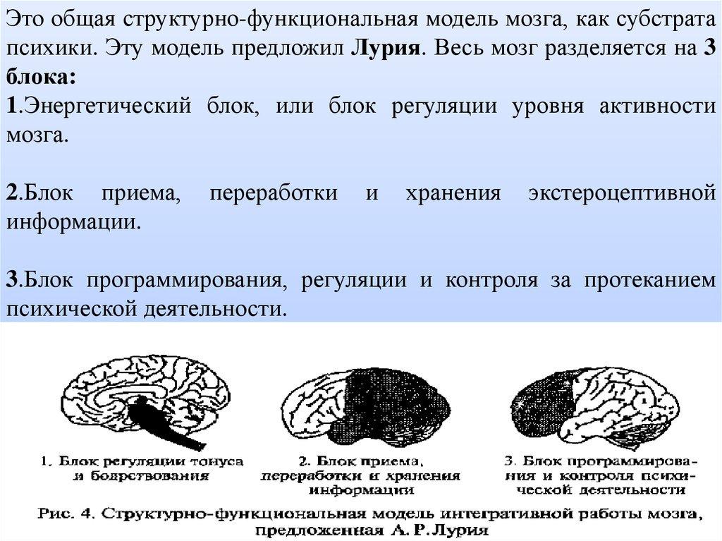 Теории и модели работы мозга работа для девушек москва высокооплачиваемая с проживанием