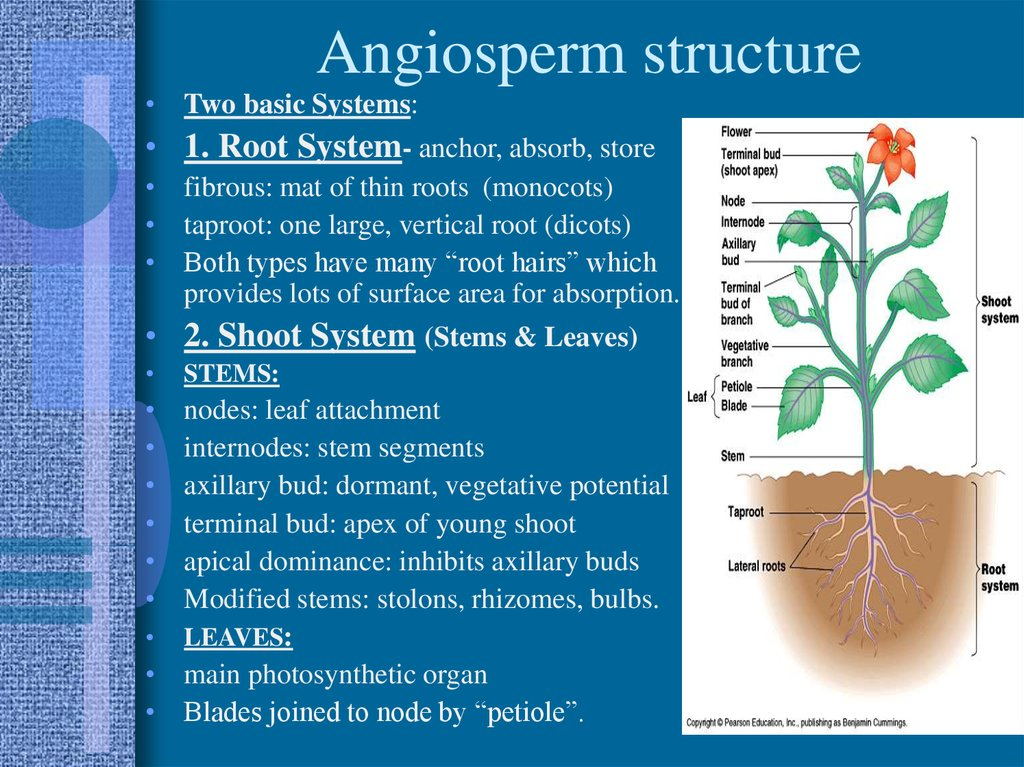 Structure And Growth Of Plants