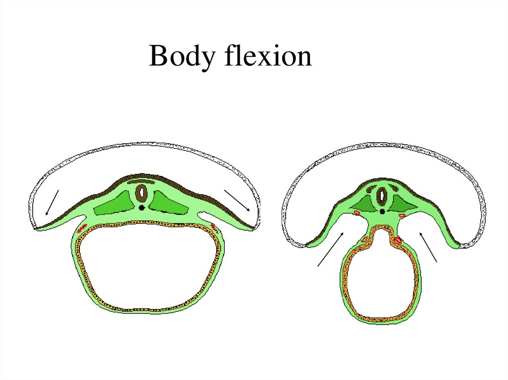 Body flexion