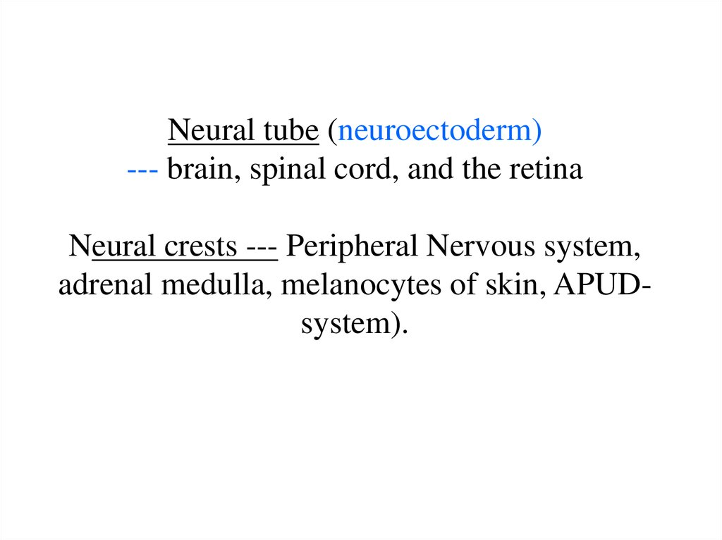 Neural tube (neuroectoderm) --- brain, spinal cord, and the retina Neural crests --- Peripheral Nervous system, adrenal