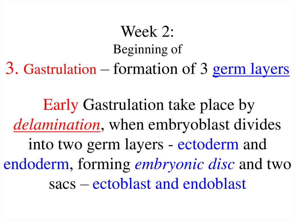 Week 2: Beginning of 3. Gastrulation – formation of 3 germ layers Early Gastrulation take place by delamination, when