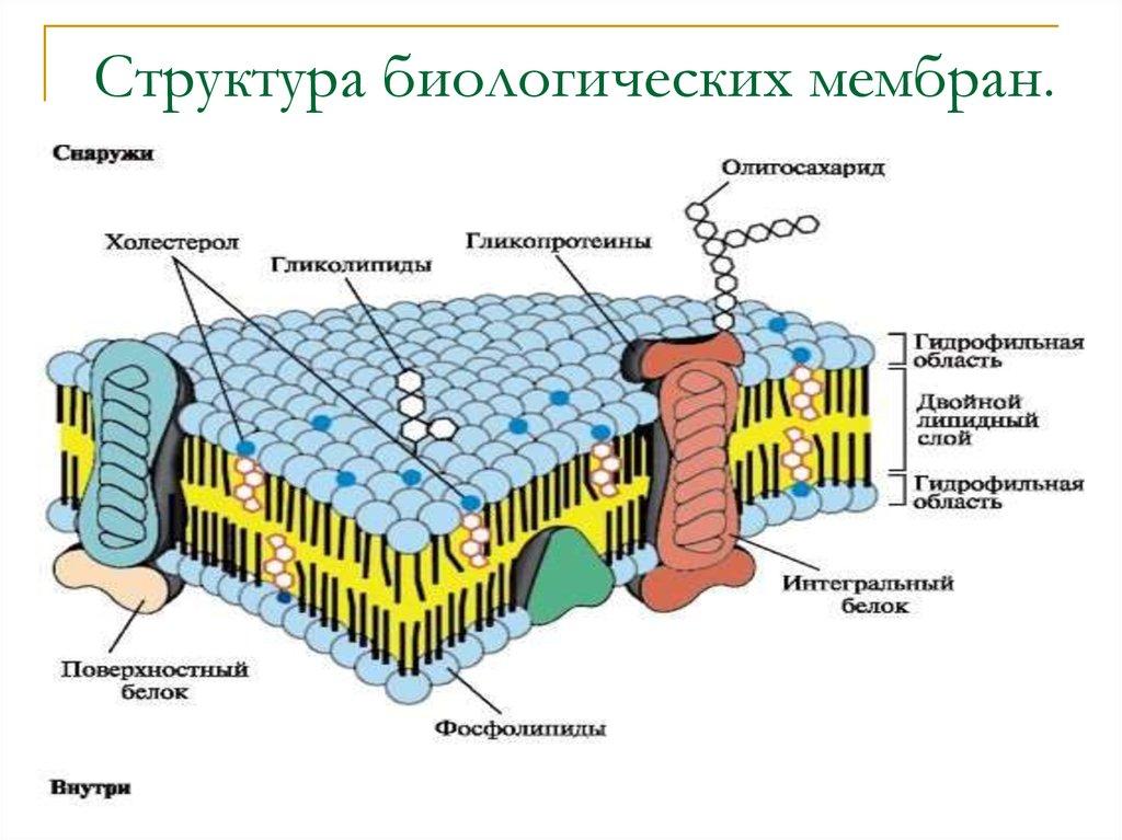 белки виды и функции