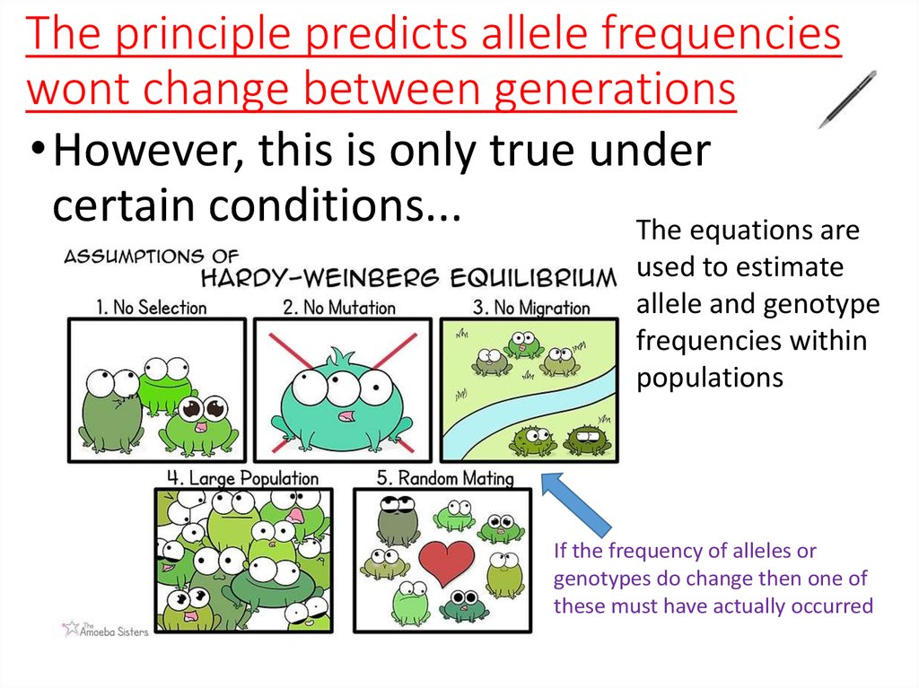 The principle predicts allele frequencies wont change between generations