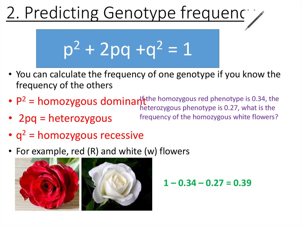 2. Predicting Genotype frequency