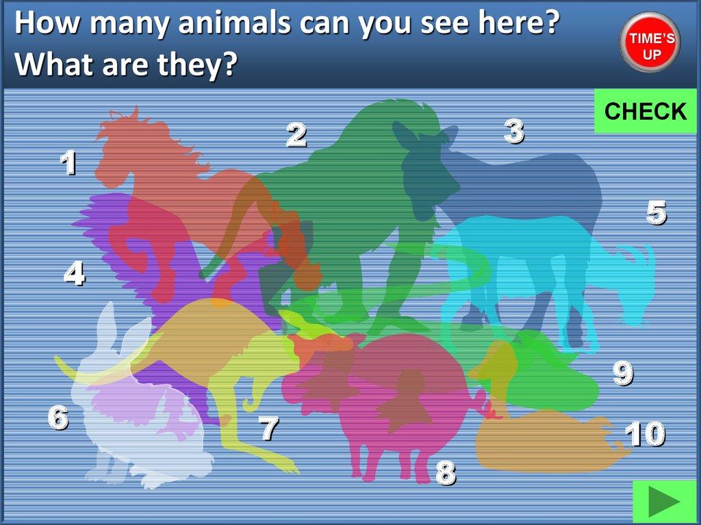 Animal quiz - презентация онлайн