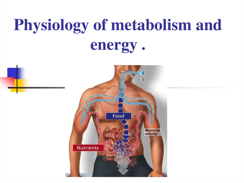 Physiology of metabolism and energy - online presentation