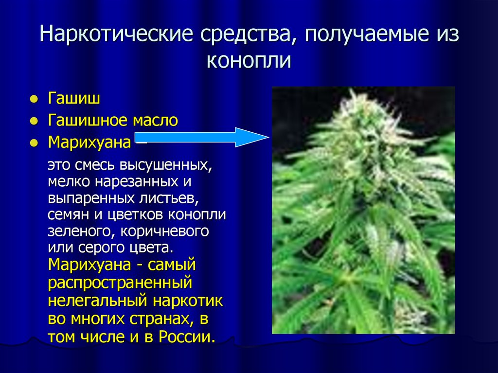 Конопля с чего состоит цветения период в для удобрения марихуаны