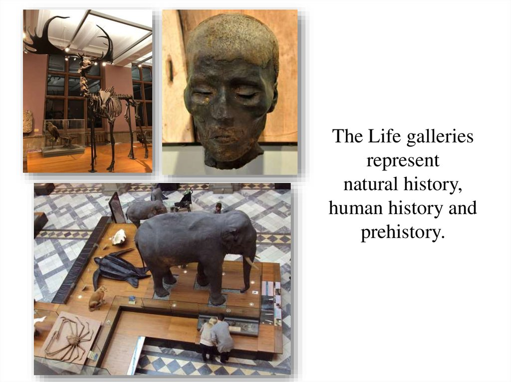 The Life galleries represent natural history, human history and prehistory.
