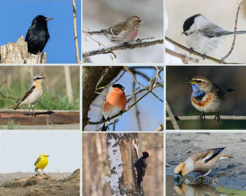 Фото птиц с названиями в тольятти достижением подороги