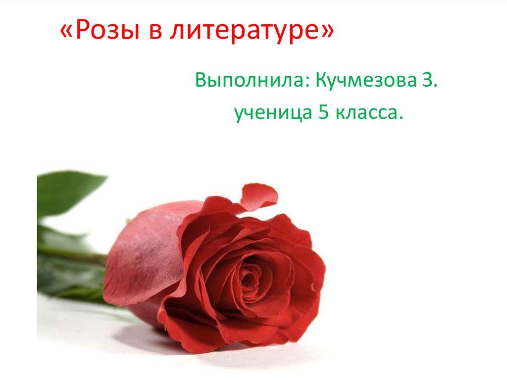Высказывания о цветах розах