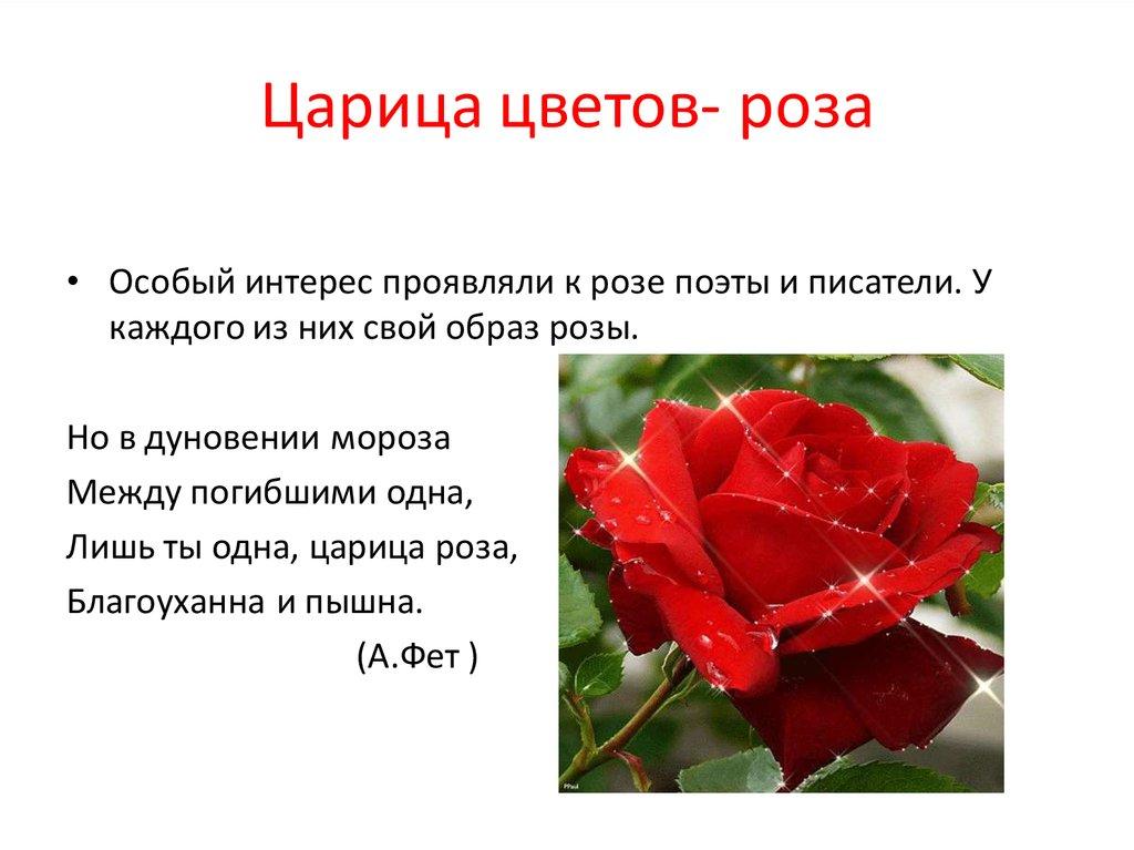 походкой красные розы стихи короткие очень высокие