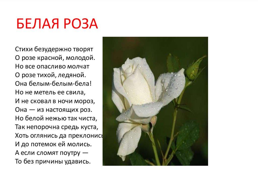 Белые цветы стихи распилить