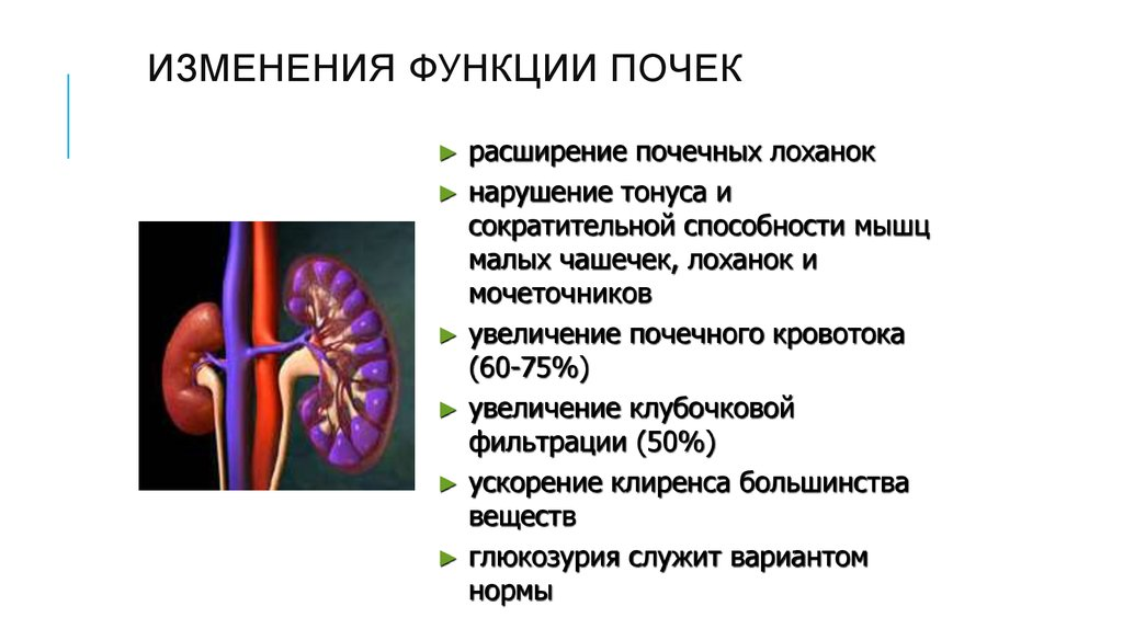 Норма у взрослых при расшифровке результатов следующая: обычно она проходит сама, когда дозревают органы мочевыделительной системы у ребенка.