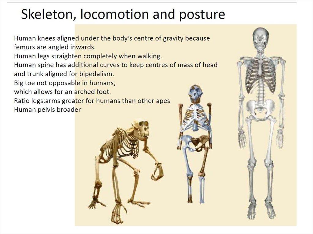 Evidence for Evolution - online presentation