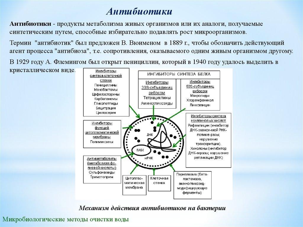 значение мутаций микроорганизмов для практики