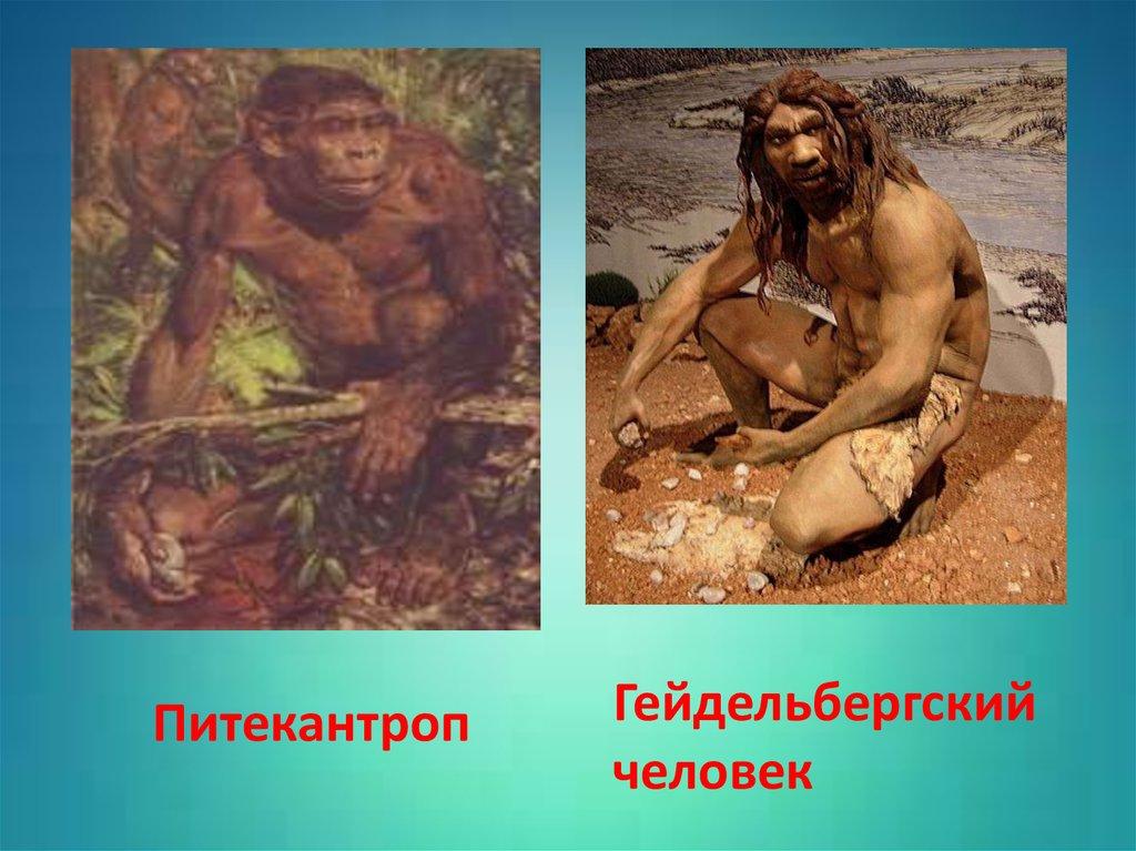 картинки питекантропы людей можете установить его