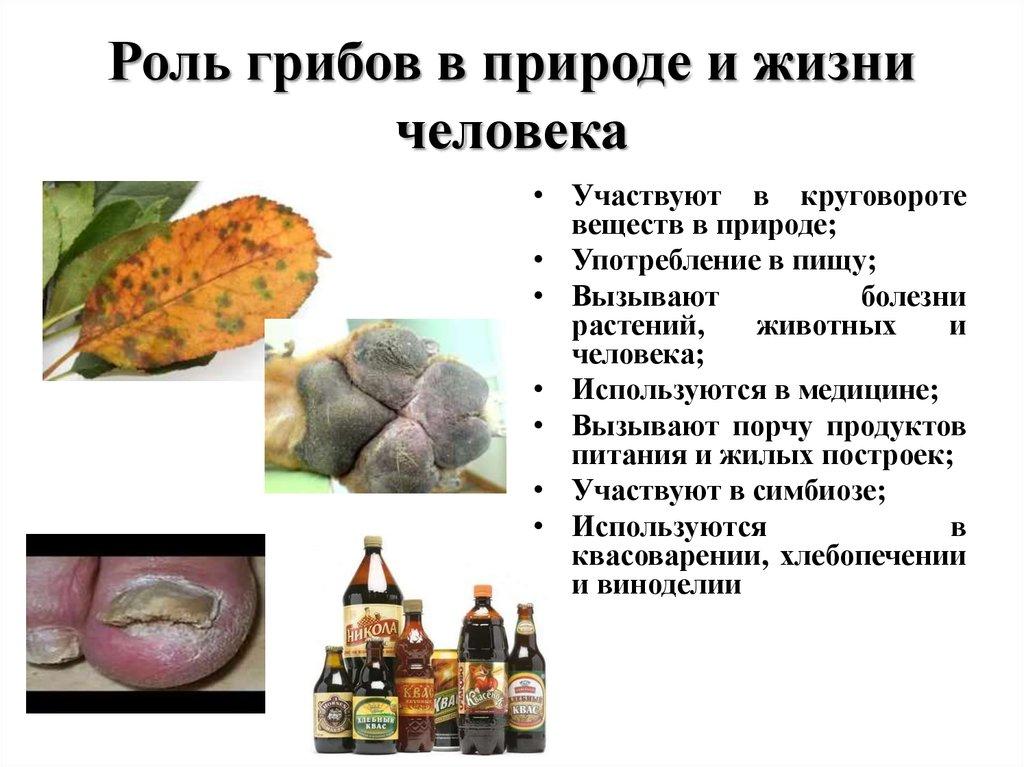 картинка роль грибов в жизни человека скоро отношения стали