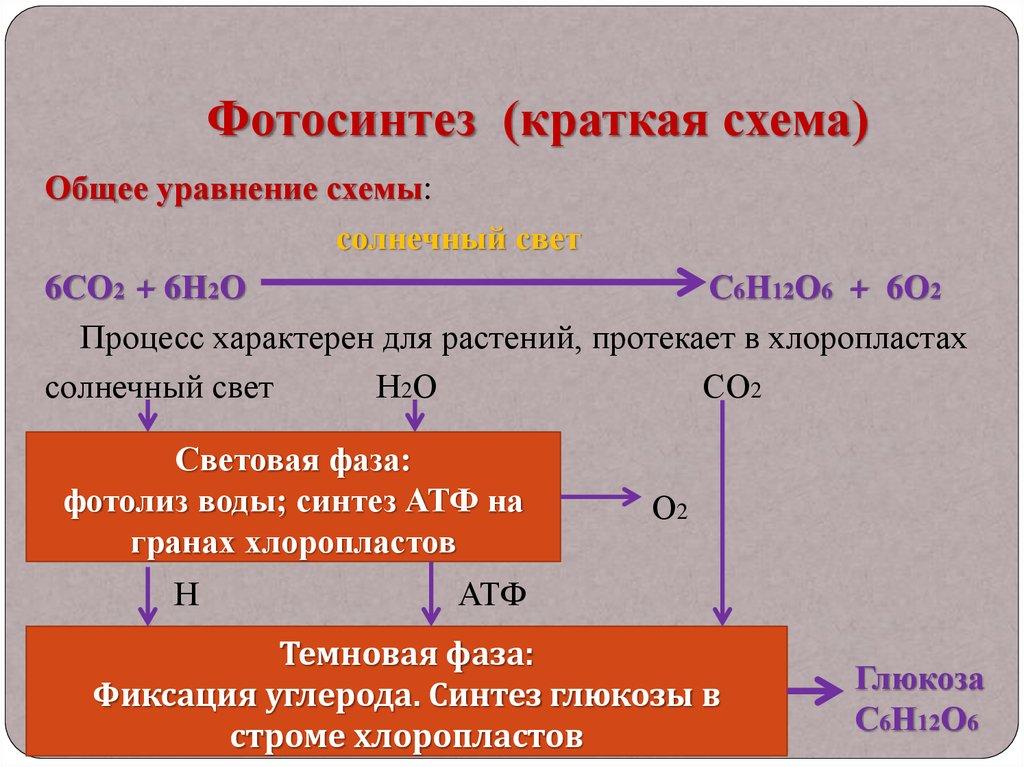 эту фотосинтез кратко конспект его окончания татьяна