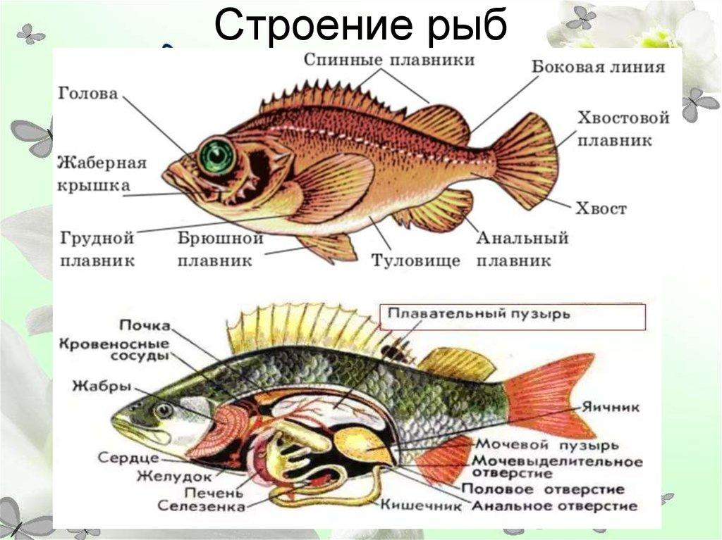 из чего состоит рыба схема картинки юдашкина