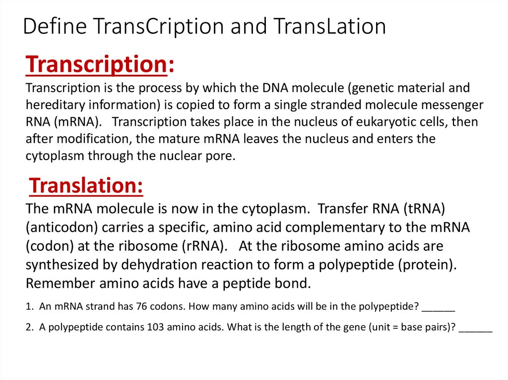 Translation 2 Transcription Takes Place In The Nucleus