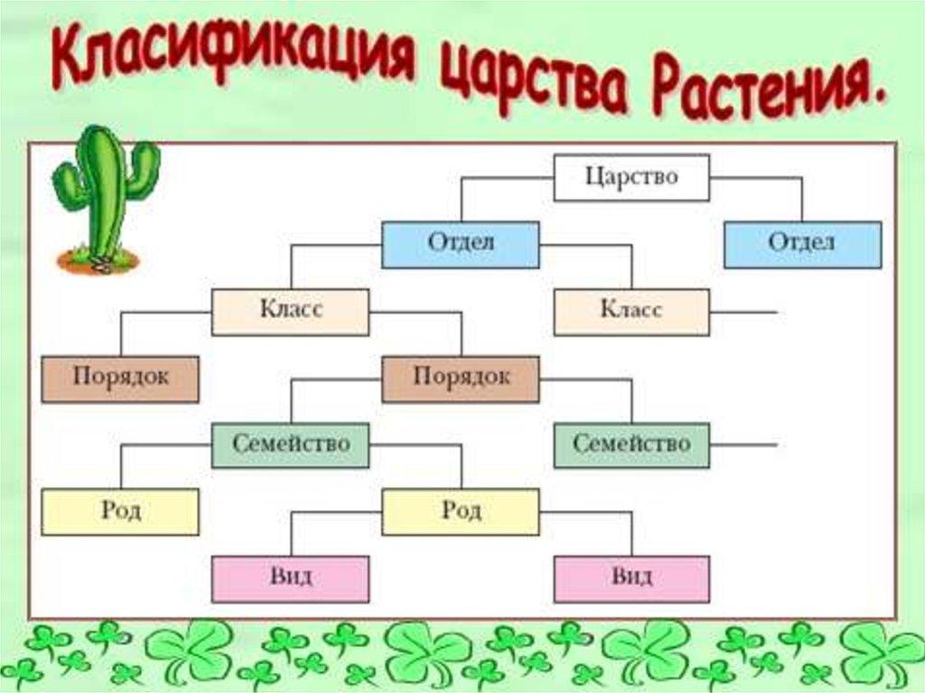 Презентация по биологии 7 класс царство растений