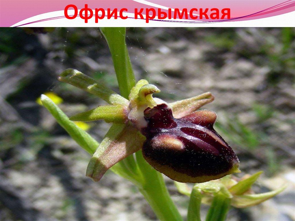 epub речник православне