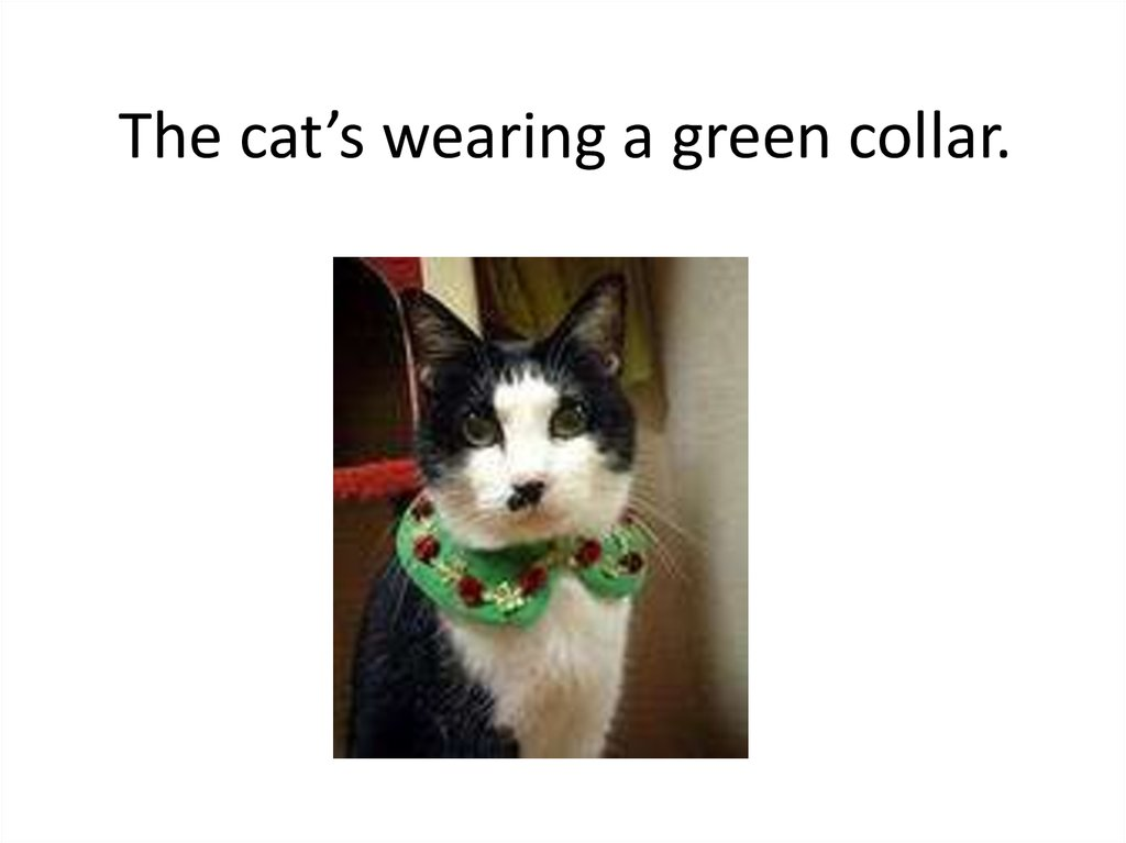 The cat's wearing a green collar.
