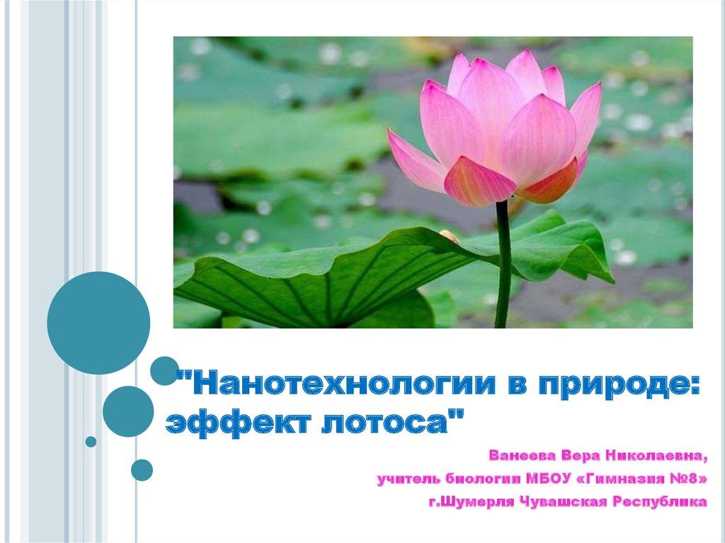 Что означают цветки лотоса