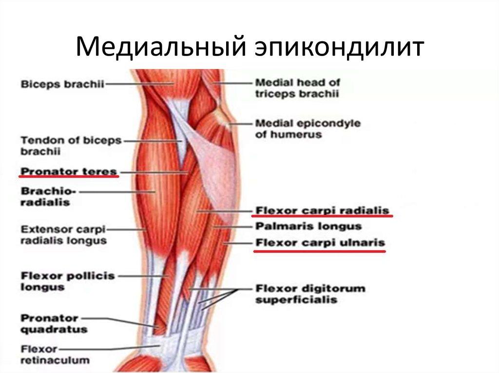 Трансфер фактор для лечения артроза