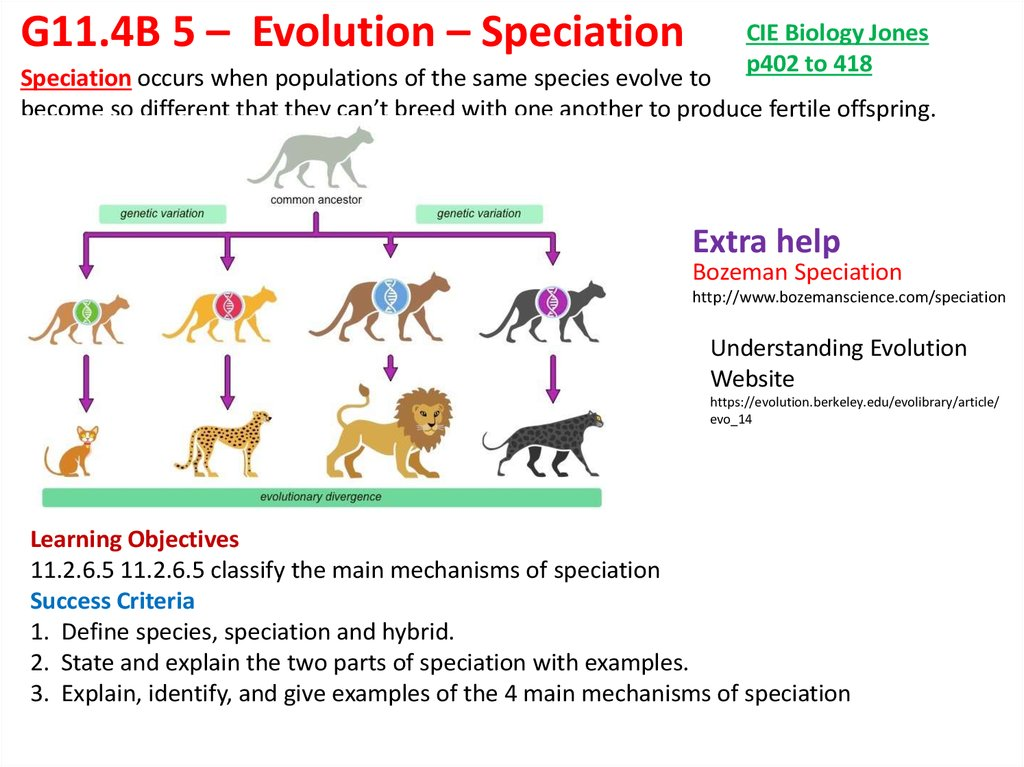 Explain The Role Of Variation In Natural Selection