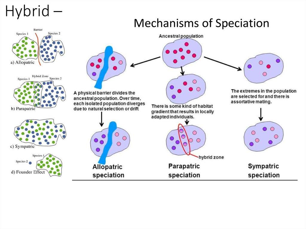 Evolution – Speciation - online presentation