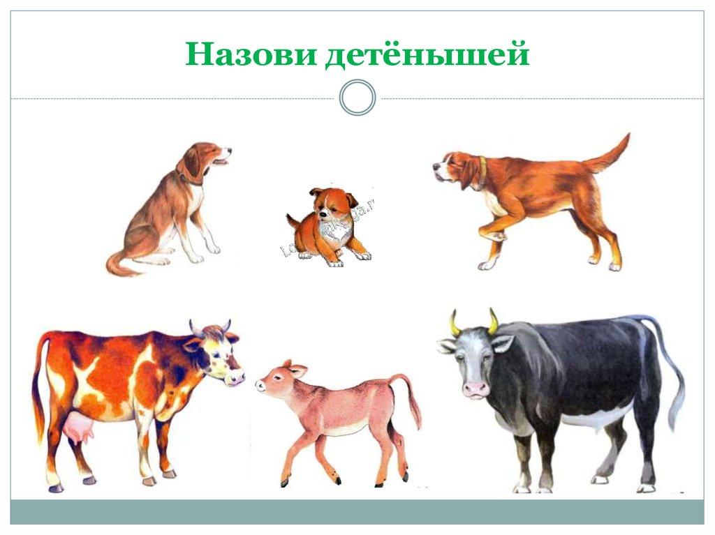 Детеныши домашних животных в картинках с названиями