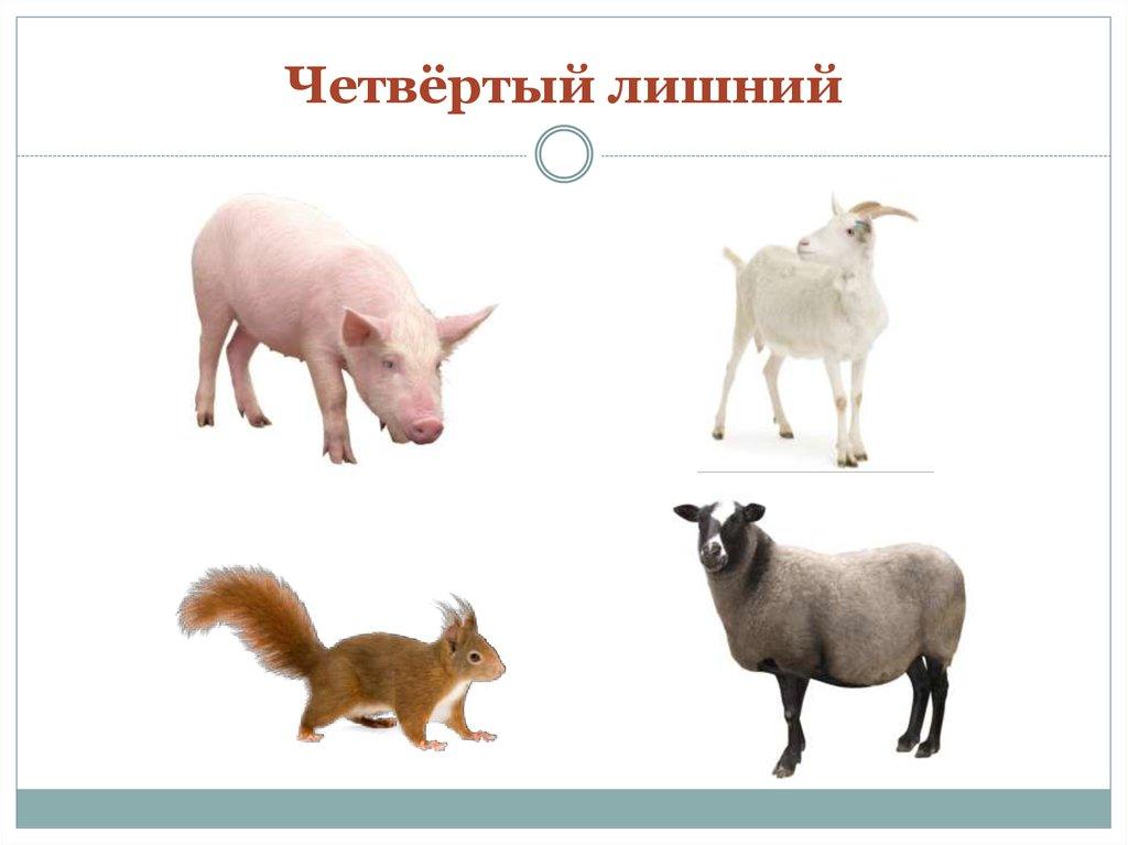 этого четвертый лишний картинки с домашними животными свои размеры, очень