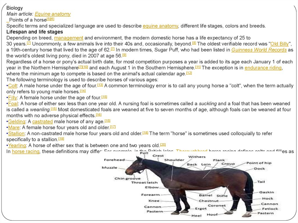 Horse breed - online presentation