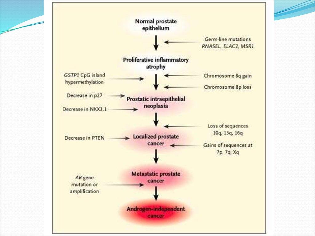 pathology of prostate cancer ppt