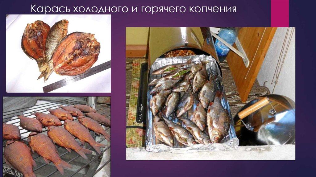 карась фото рыба