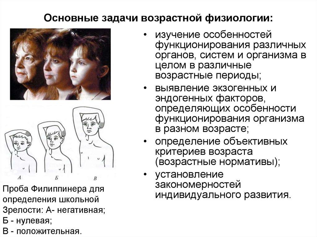 Дошкольников шпаргалки анатомия гигиена возрастная физиология для и