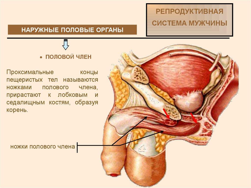 Женские гениталии в сперме трут