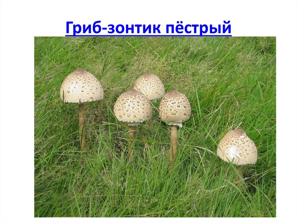 Exstazy Магазин Черкесск вологда курительные смеси 8921